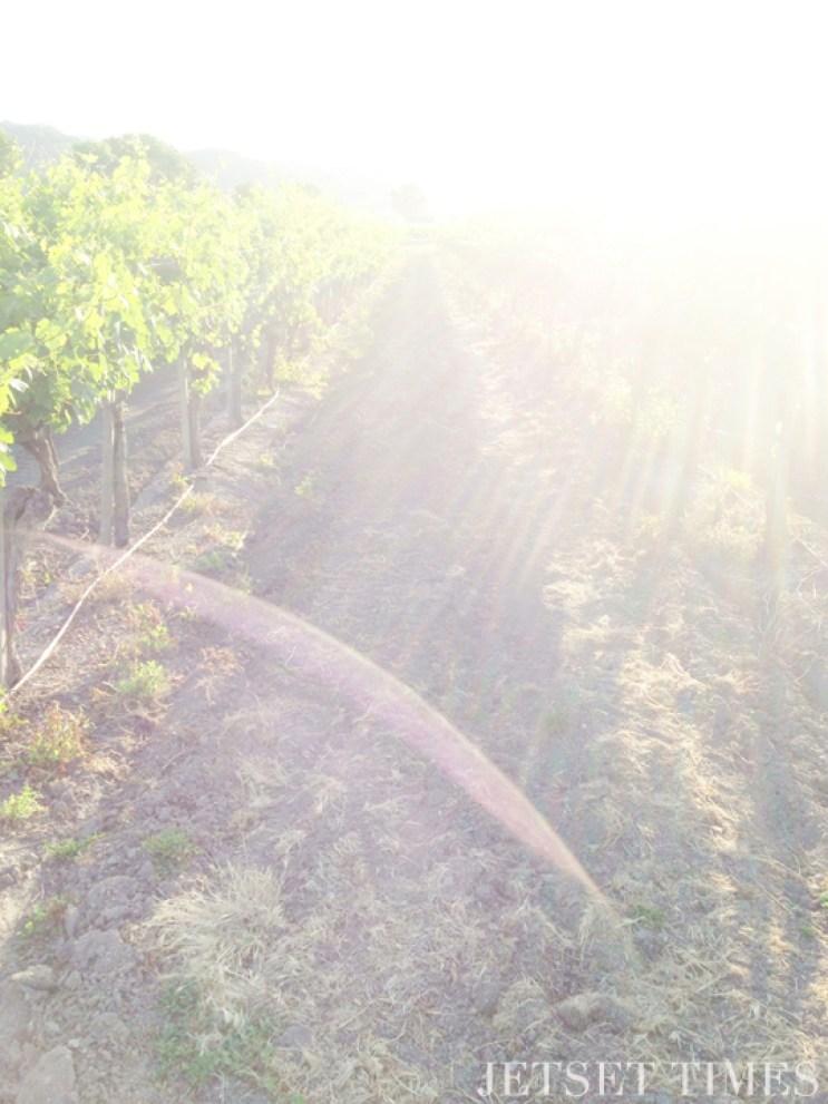 Santa Ynez Valley Los Olivos