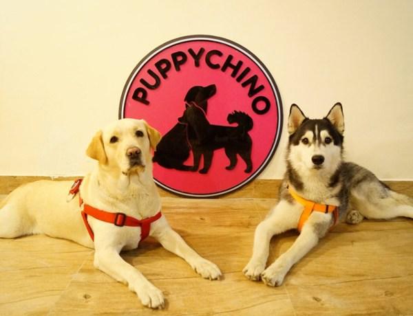 Facebook Puppychino 1