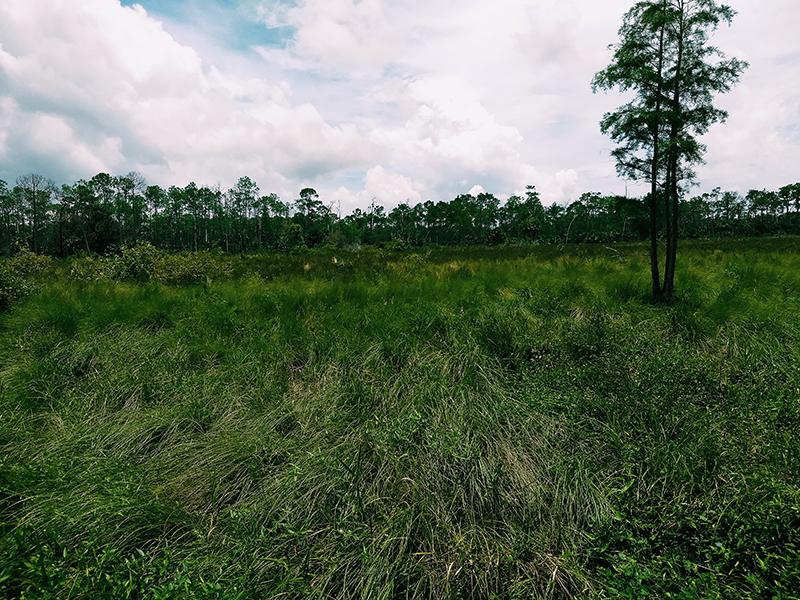 Florida Marshlands.
