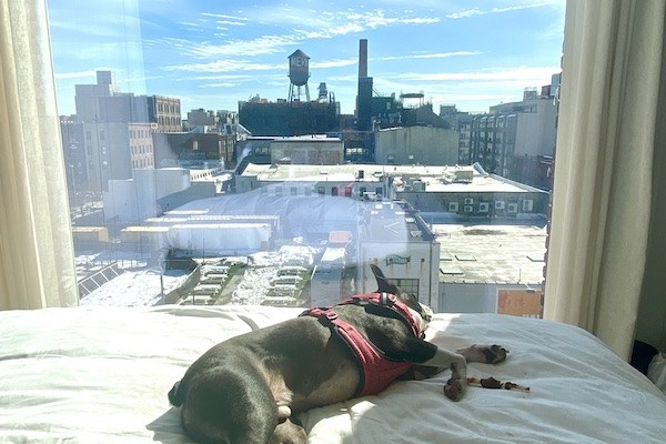 Bowie taking a nap at The Williamsburg Hotel. copy