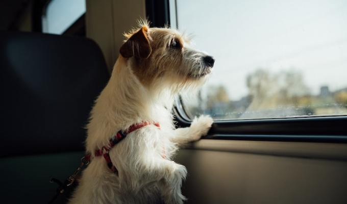 Dog pets are travel
