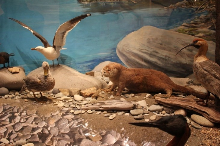 Displays at Patagonia Museum Natural History