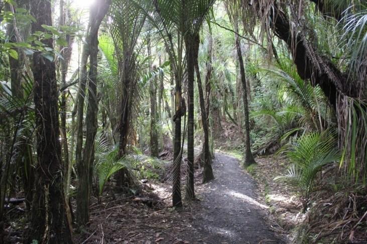 Hiking Paths in Titirangi Beach New Zealand