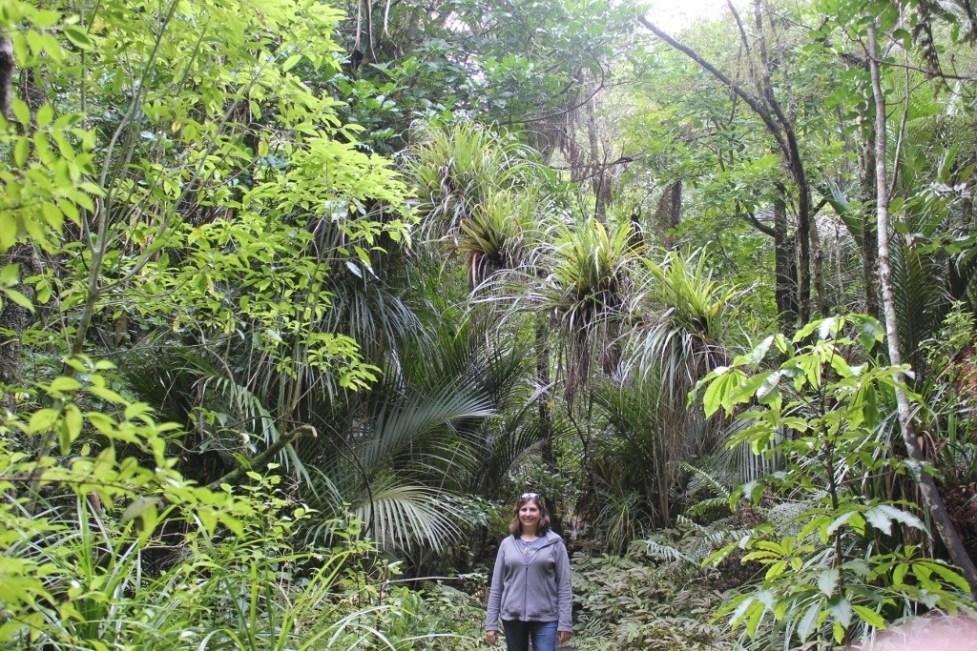 Walking through Atkinson Park on Zig Zag Hiking Path in Titirangi Auckland, New Zealand