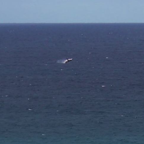 Whale Watching Coolangatta from Point Danger on the Gold Coast, Australia