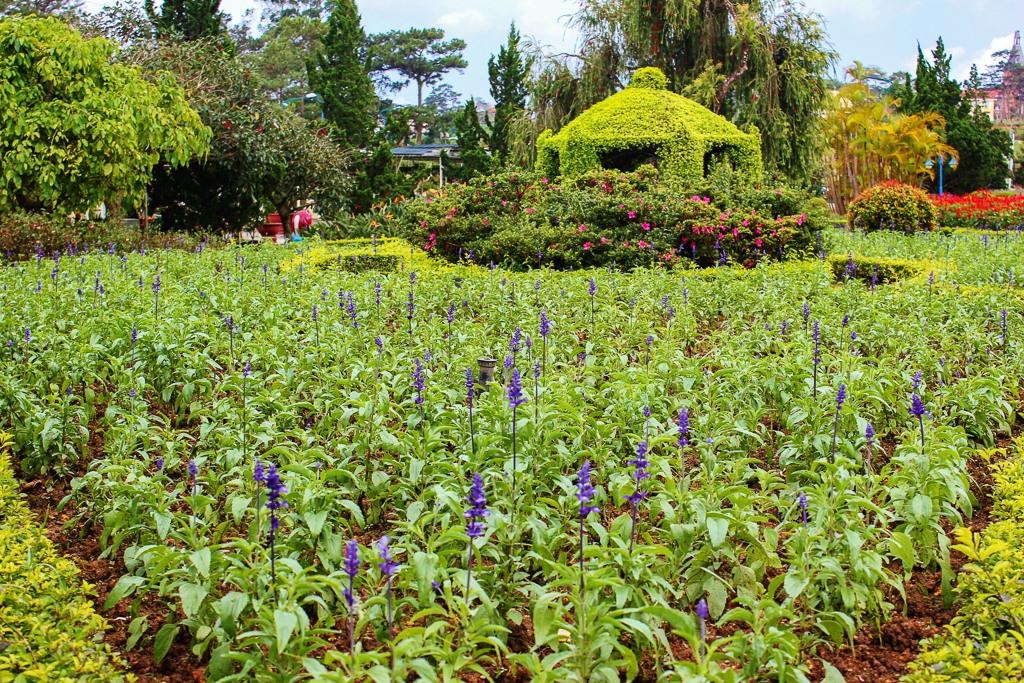 Blooming flowers in Flower Garden in Dalat, Vietnam