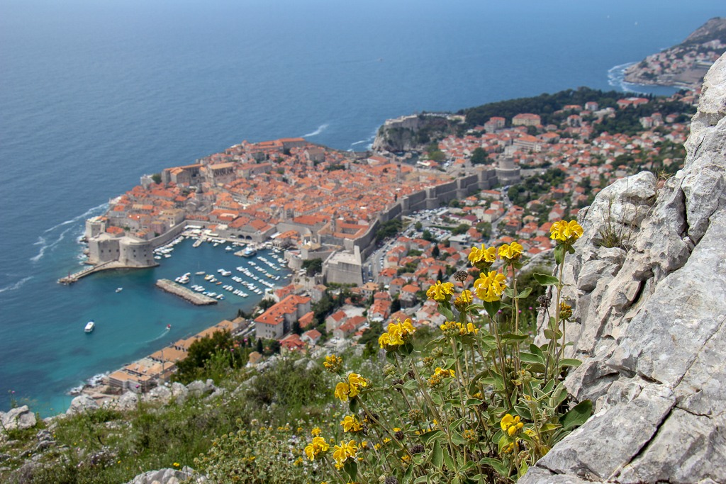 Yellow flowers growing on mountainside and Dubrovnik, Croatia in background