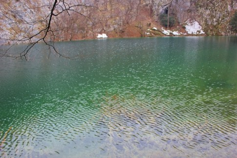 Vivid green water of Lower Lakes at Plitvice Lakes NP in Croatia