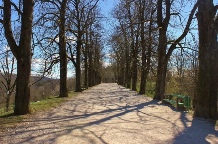 Tree-lined hiking path on Castle Hill in Ljubljana, Slovenia