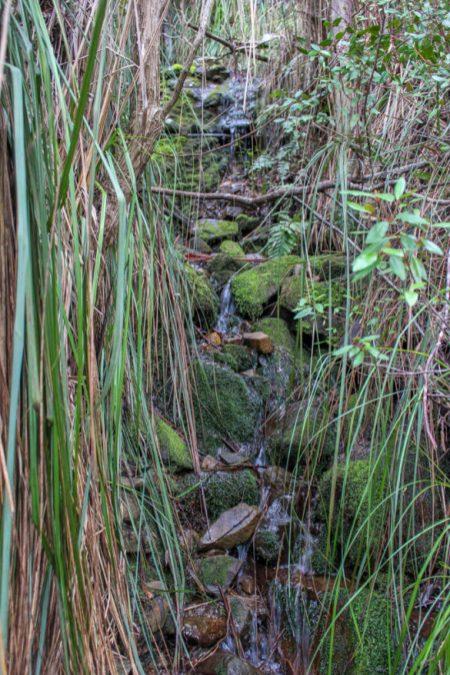 Nature scene, Mt Wellington, Hobart, Tasmania, Australia