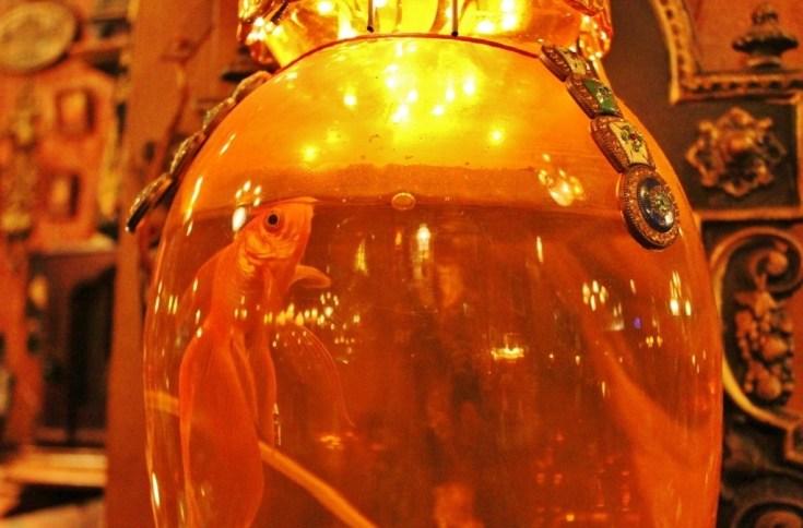 Goldfish at Zlatna Ribica Bar in Sarajevo, Bosnia