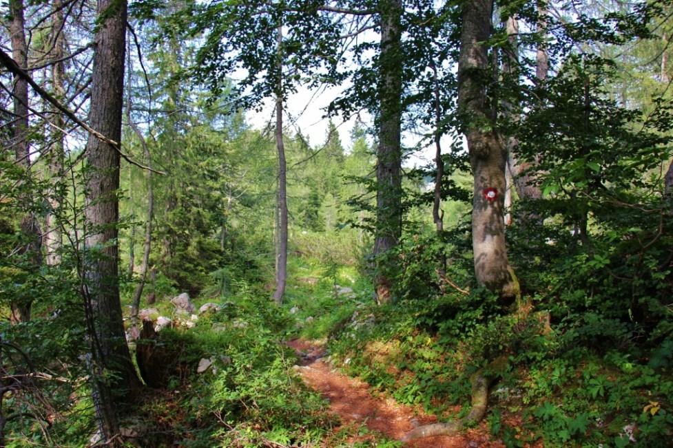 Forest hiking trail near Lake Bohinj by Vogel Ski Center