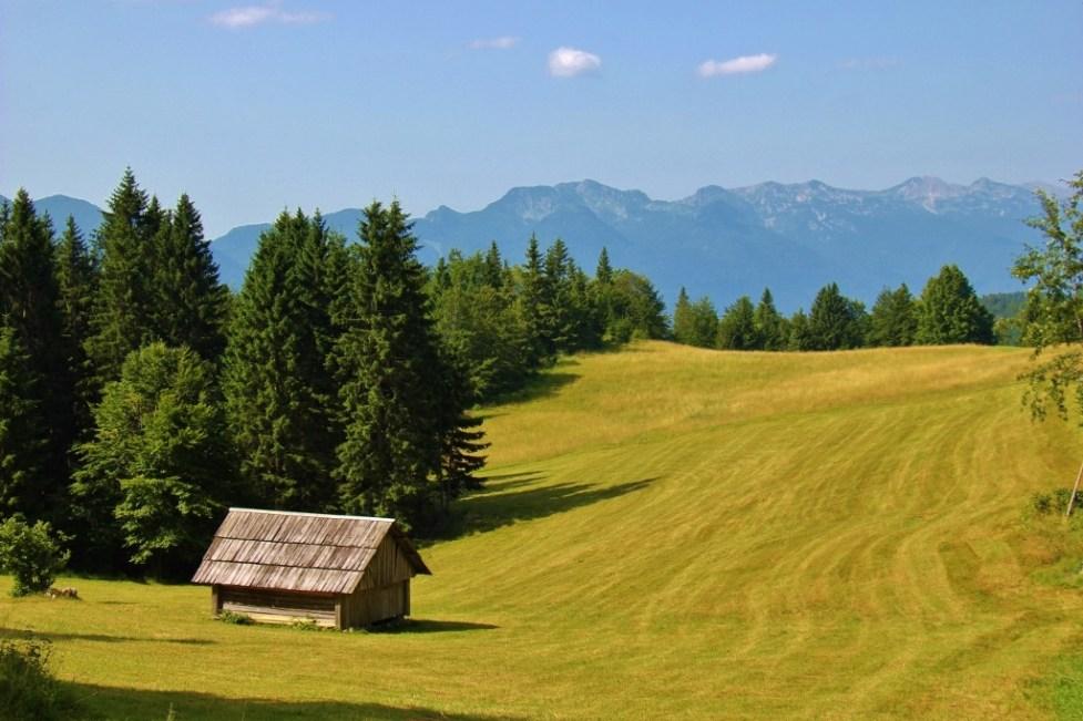 Pokljuka Plateau hiking trails near Lake Bohinj, Slovenia