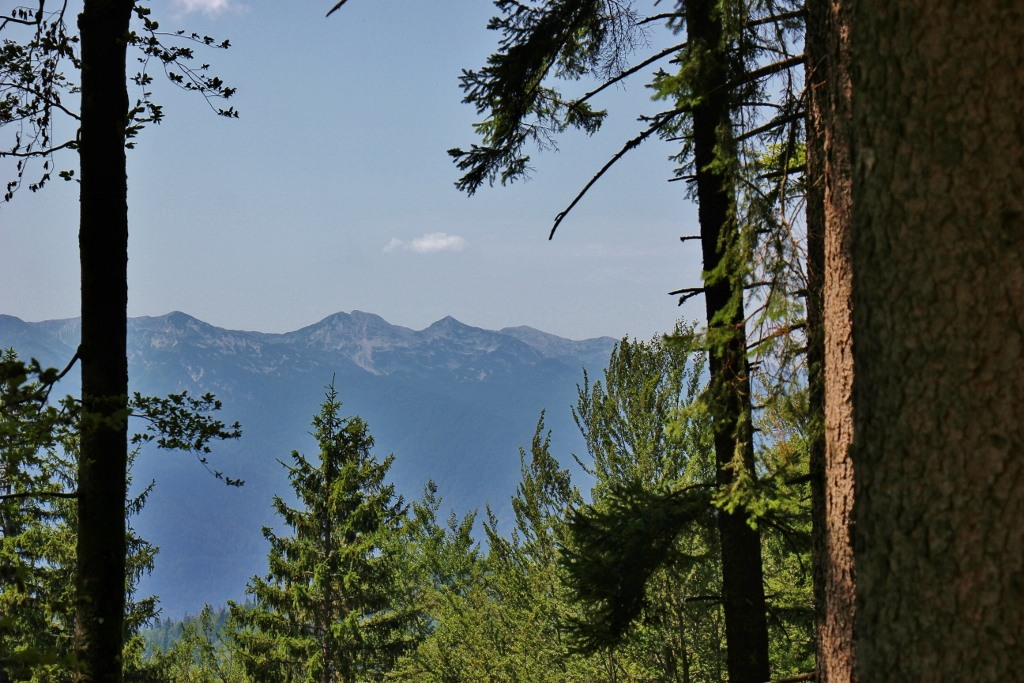 Mountain Views through forest from Pokljuka Plateau near Lake Bohinj, Slovenia