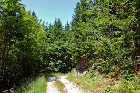 Hiking trail in Gorjuse near Lake Bohinj, Slovenia