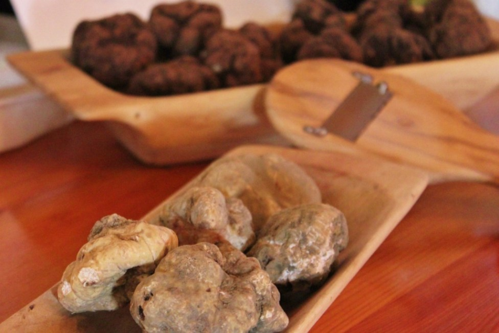 White and black truffles at Karlic Tartufi in Paladini, Istria, Croatia