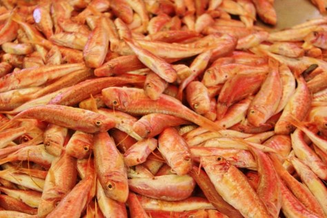 Fresh fish for sale at Fish Market in Split, Croatia