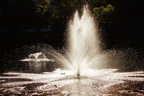 Fountain on pond at City Botanic Gardens in Brisbane, Australia