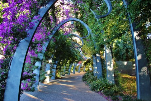 Flower canopy on The Arbour walking path in South Bank, Brisbane, Australia