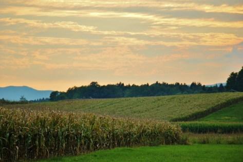 Sunset over corn fields at Big Berry Glamping Resort, Bela Krajina, Slovenia