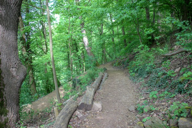 Dirt trail in Schlossberg in Black Forest Freiburg, Germany