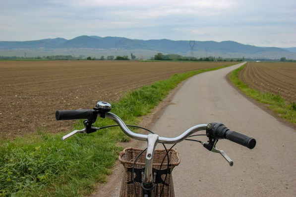 Bike riding to Eguisheim from Colmar, France