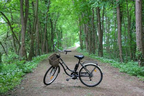 Dirt bike trail through forest in Colmar, France