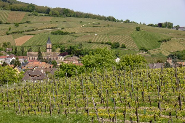 Vineyard landscapes on walk to Ribeauville, France