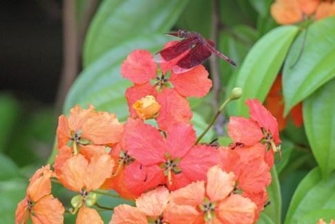 Dragonfly sits on flower at Perdana Botanical Garden in Kuala Lumpur, Malaysia