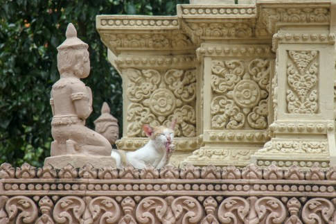 Cat preening itself at Moha Montrei Pagoda in Phnom Penh, Cambodia