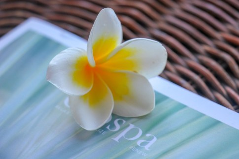 Plumeria flower at spa in Canggu, Bali, Indonesia