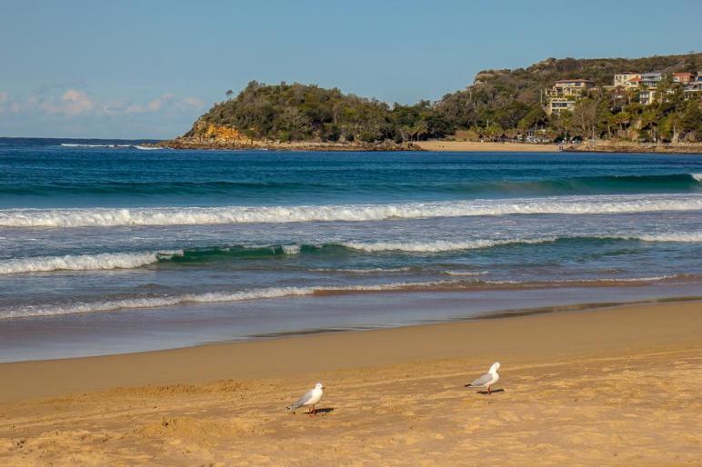 Seagulls on Manly Beach in Sydney, Australia