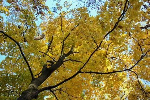 Fall Colors, Ivan Franko Park, Lviv, Ukraine