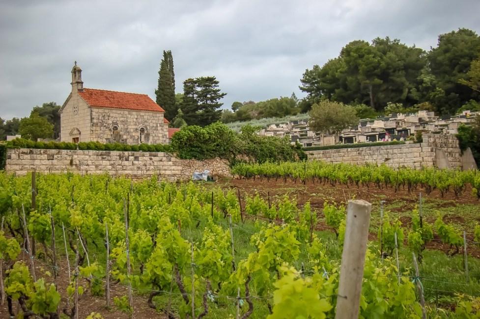 Vineyards in Lumbarda on Korcula Island, Croatia