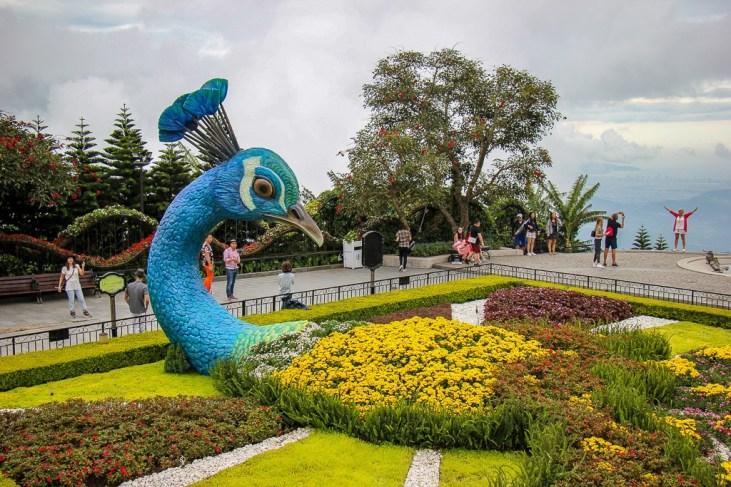 Peacock flower garden at Ba Na Hills in Da Nang, Vietnam