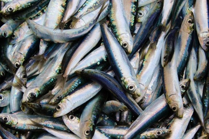 Fish Market of Split, Croatia