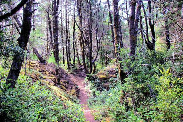 Wooded path on Tahkenitch Creek Trail near Florence, Oregon
