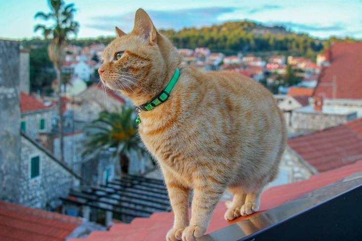 Dave in Croatia, Trusted Housesitters