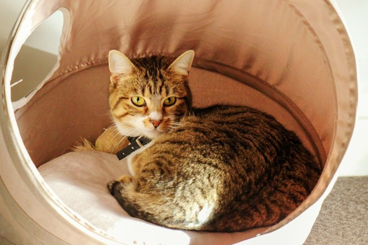 Scully Cat Sit, Trusted Housesitters