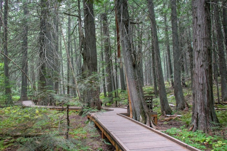 Walking along the Trail Of The Cedars Boardwalk, Glacier National Park, Montana
