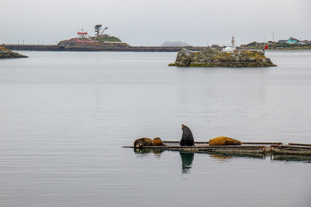 See the Sea Lions, Crescent City CA