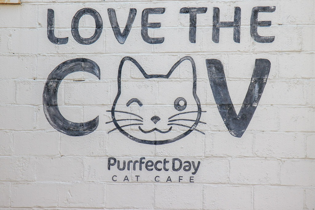 Purrfect Day Cafe Cat Cafe, Covington KY