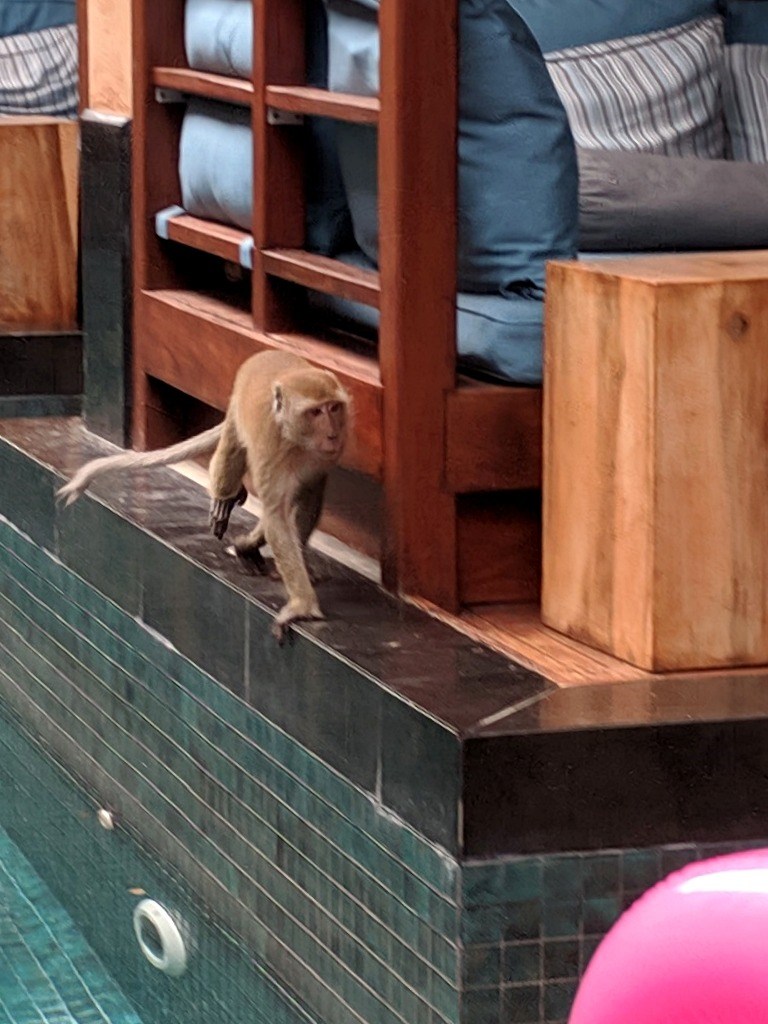 Monkey at the hotel in Raailay