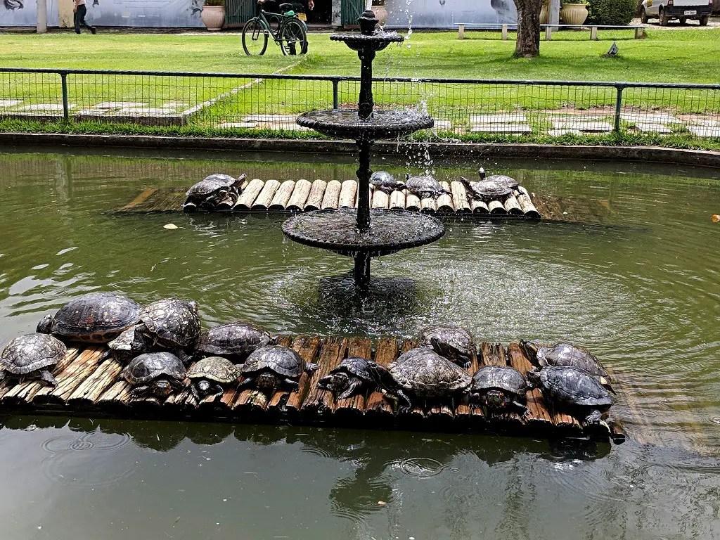 Visiting Jardim Botânico do Rio de Janeiro: Turtle lake
