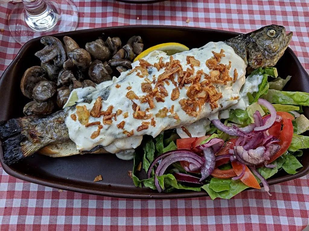 Carpathian trout