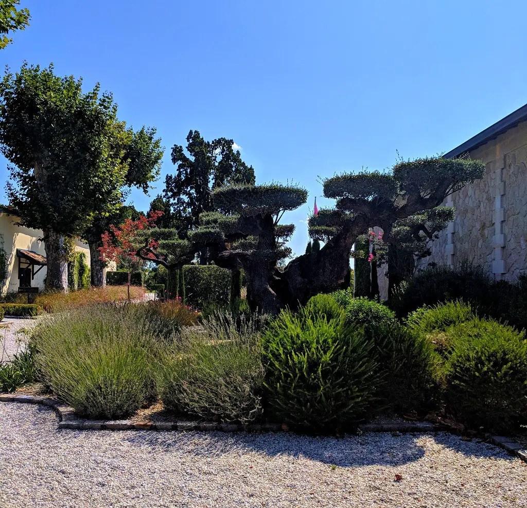 Taking A Chateau Pape Clement Vineyard Tour In Bordeaux