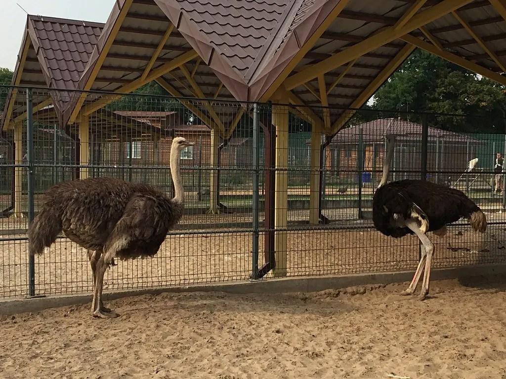 Mezhyhirya Zoo