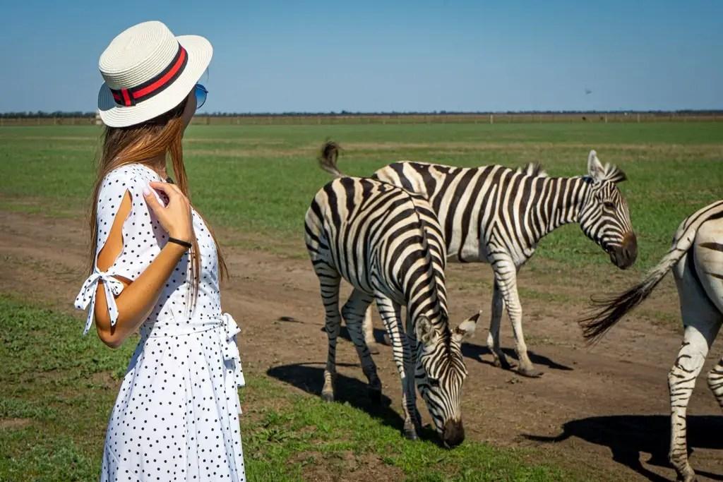Me standing with the zebras of Askania-Nova