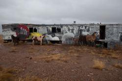 horses-+-sheep-in-gray-mtn-i