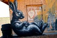 rabbit-evolved